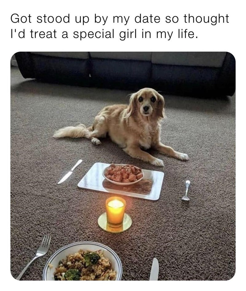 Dog - Got stood up by my date so thought l'd treat a special girl in my life.