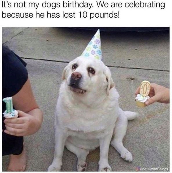 Dog - It's not my dogs birthday. We are celebrating because he has lost 10 pounds! NotHumanBeings