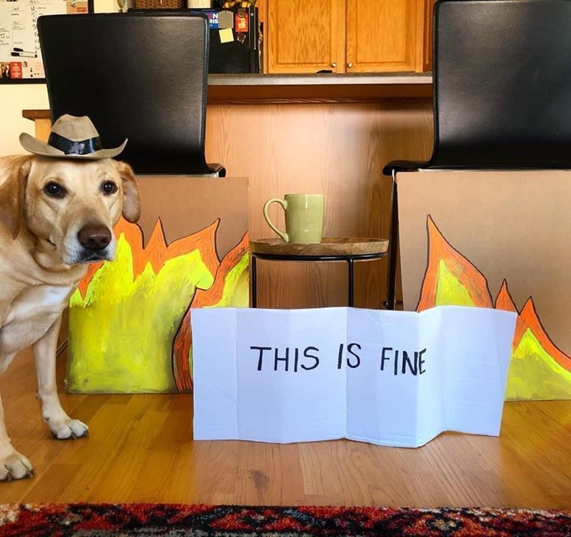 Dog - Ris THIS IS FINE
