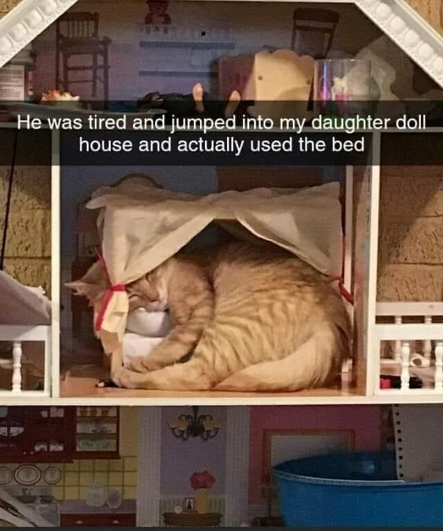 Cat - He was tired and jumped into my daughter doll. house and actually used the bed