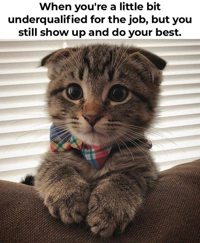 Cat - When you're a little bit underqualified for the job, but you still show up and do your best.