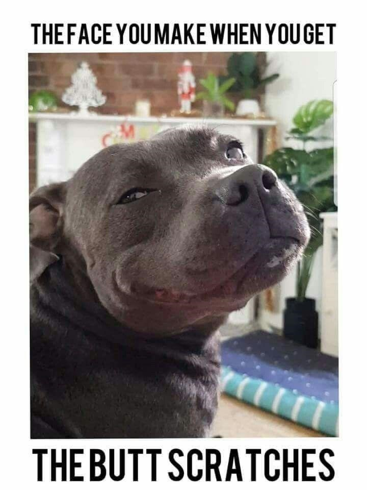 Mammal - THEFACE YOUMAKE WHEN YOU GET THE BUTT SCRATCHES