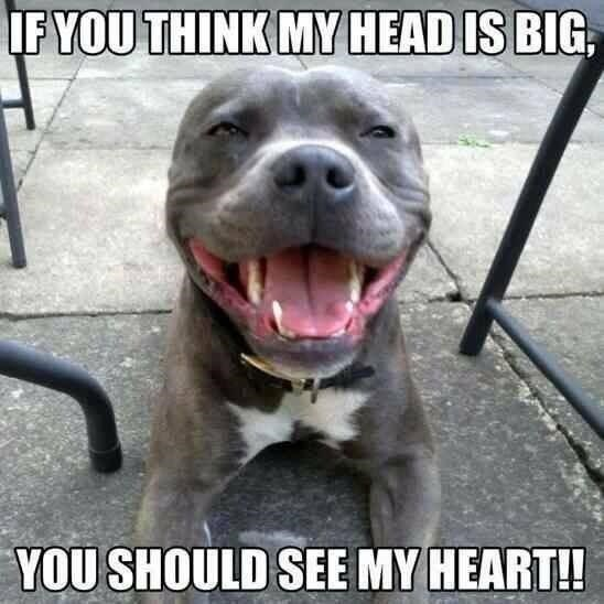 Vertebrate - IF YOU THINK MY HEAD IS BIG, YOU SHOULD SEE MY HEART!