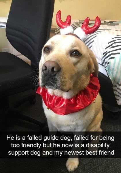 He is a failed guide dog, failed for being too friendly but he now is a disability support dog and my newest best friend cute snapchat of a dog in Christmas costume