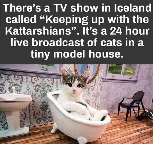 "There's a TV show in Iceland called ""Keeping up with the Kattarshians"". It's a 24 hour live broadcast of cats in a tiny model house 