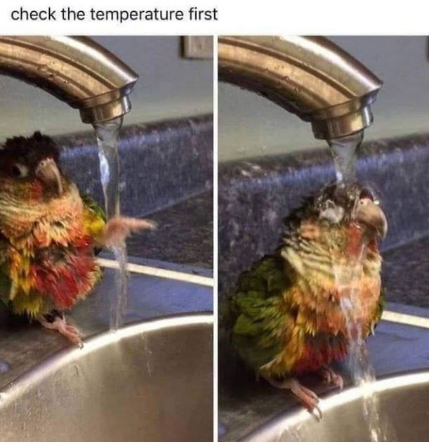 check the temperature first | tiny bird birb showering in the sink