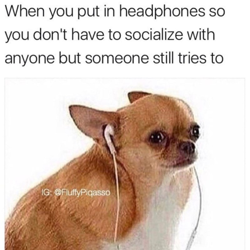 Dog - When you put in headphones so you don't have to socialize with anyone but someone still tries to IG: @FluffyPiqasso