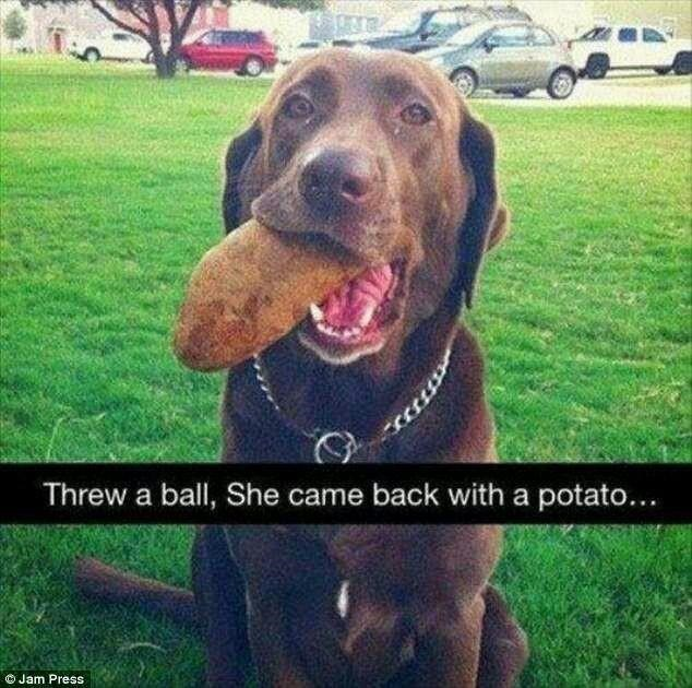 Dog - Threw a ball, She came back with a potato... O Jam Press