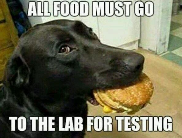 Dog breed - ALL FOOD MUST GO TO THE LAB FOR TESTING