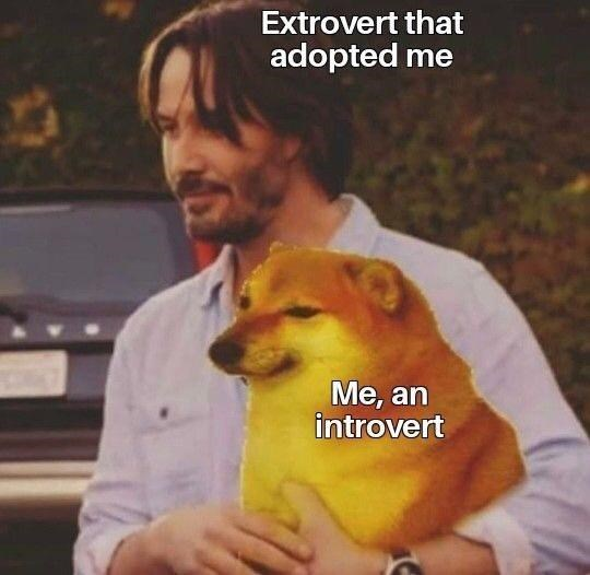 Dog - Extrovert that adopted me Ме, an introvert