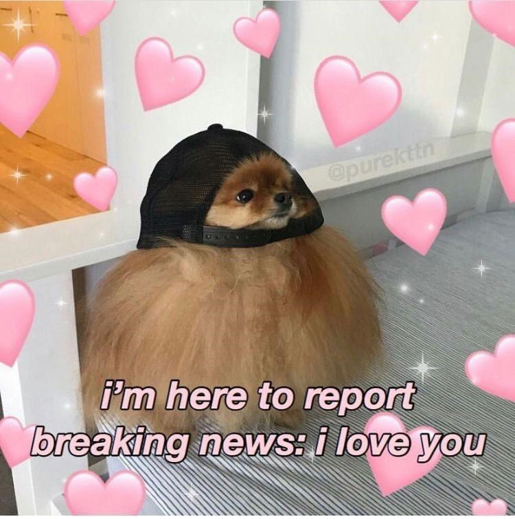 Pink - @purekttn i'm here to report breaking news: i love you