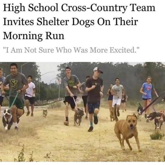 "Cani cross - High School Cross-Country Team Invites Shelter Dogs On Their Morning Run ""I Am Not Sure Who Was More Excited."""