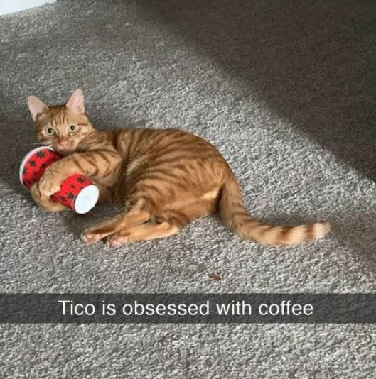 Cat - Tico is obsessed with coffee