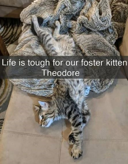 Fur - Life is tough for our foster kitten Theodore