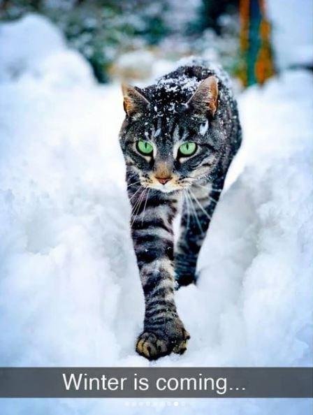 Cat - Winter is coming...