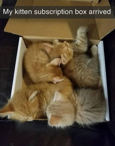 Cat - My kitten subscription box arrived