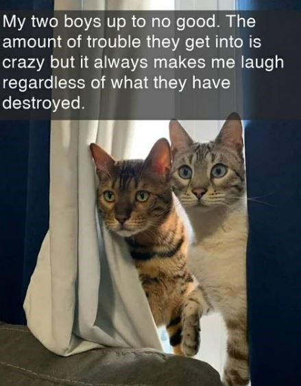 Cat - My two boys up to no good. The amount of trouble they get into is crazy but it always makes me laugh regardless of what they have destroyed.