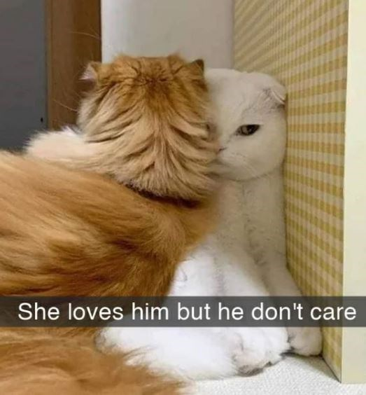 Cat - She loves him but he don't care