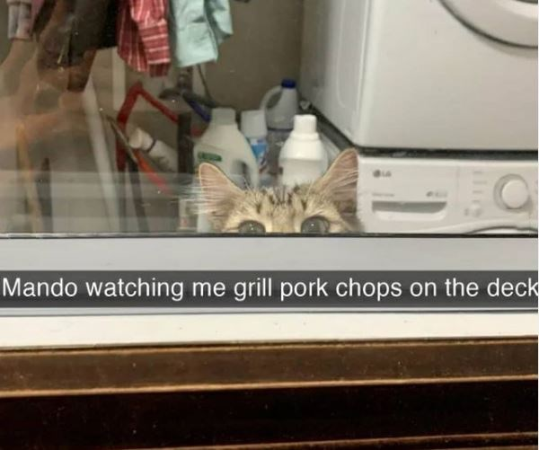 Cat - Mando watching me grill pork chops on the deck