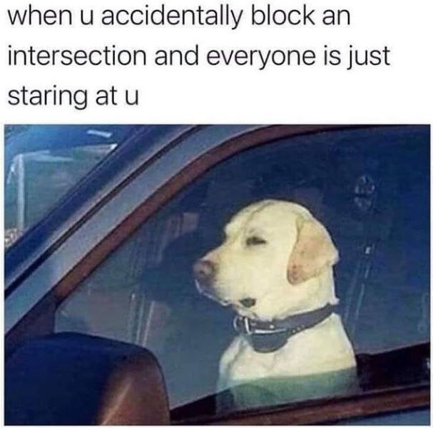 when u accidentally block an intersection and everyone is just staring at u | dog sitting in the front seat of a car staring ahead