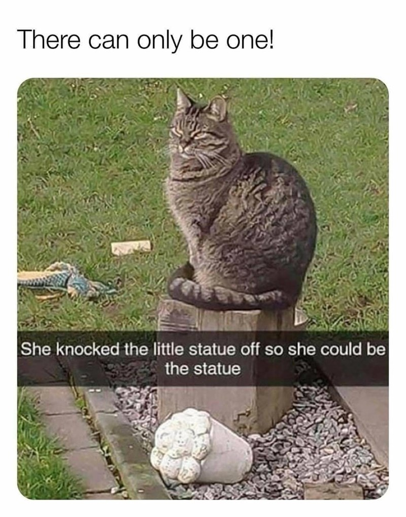 There can only be one! She knocked the little statue off so she could be the statue | cat sitting on a pedestal
