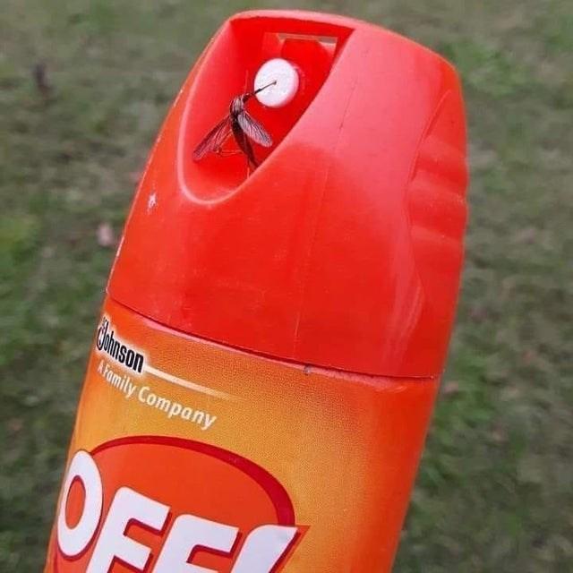 Orange - hnson AFamily Company OFF