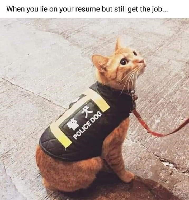 funny memes, memes, animal memes, cats | When you lie on your resume but still get the job... cat wearing a police dog vest
