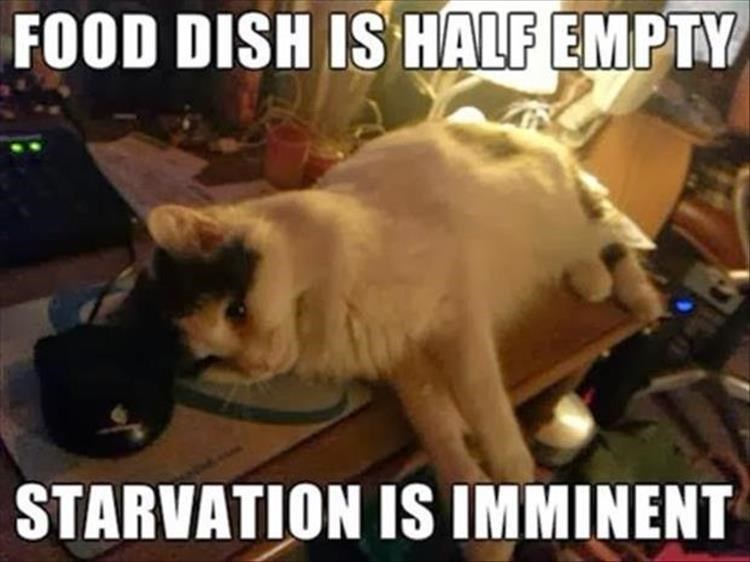 FOOD DISH IS HALF EMPTY STARVATION IS IMMINENT cat lying on its side looking depressed