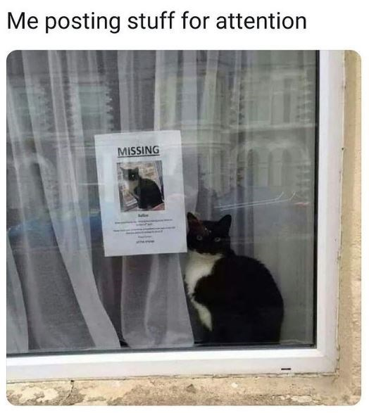 Me posting stuff for attention cat posing next to a missing poster with its photo on it