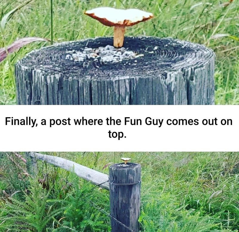 Tree stump - Finally, a post where the Fun Guy comes out on top.