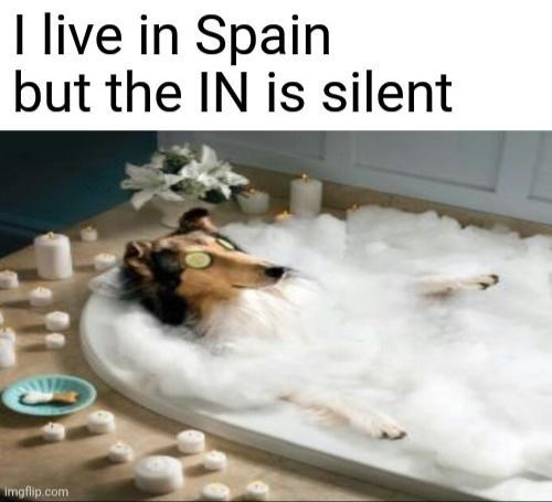 Funny memes, dank memes, stupid memes, random memes, dog memes, spa, spain | I live in Spain but the IN is silent dog getting spa treatment