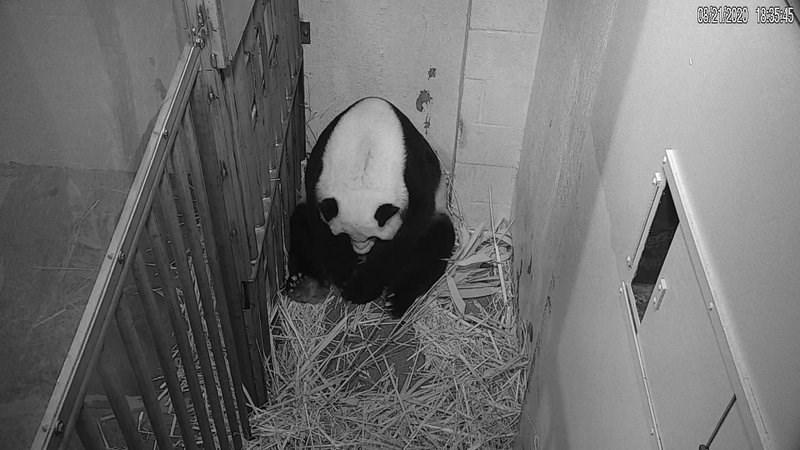 Panda - 0321/2020 1835:45