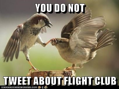 YOU DO NOT TWEET ABOUT FLlGHT CLUB | funny pic of small birds fighting fight club pun