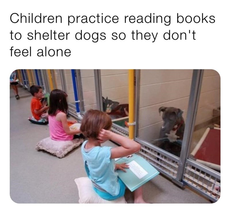 Children practice reading books to shelter dogs so they don't feel alone | pic of kids sitting on the floor in front of cages reading to the dogs inside