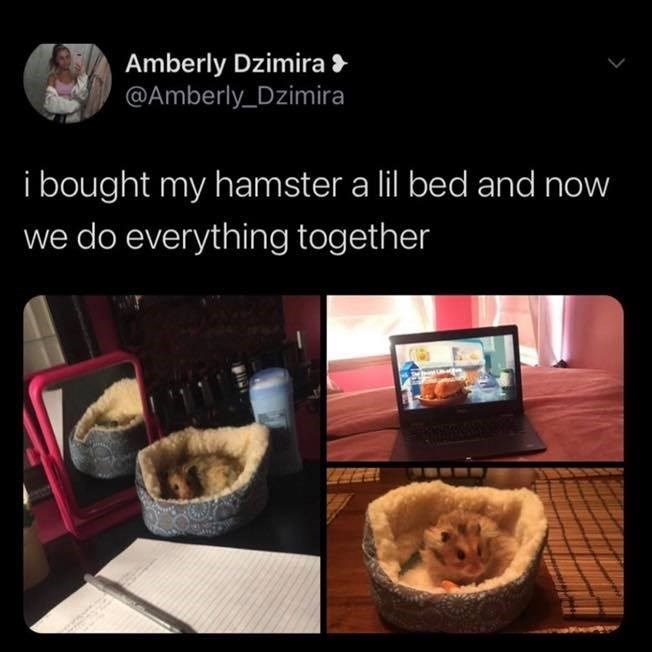 Food - Amberly Dzimira > @Amberly_Dzimira i bought my hamster a lil bed and now we do everything together