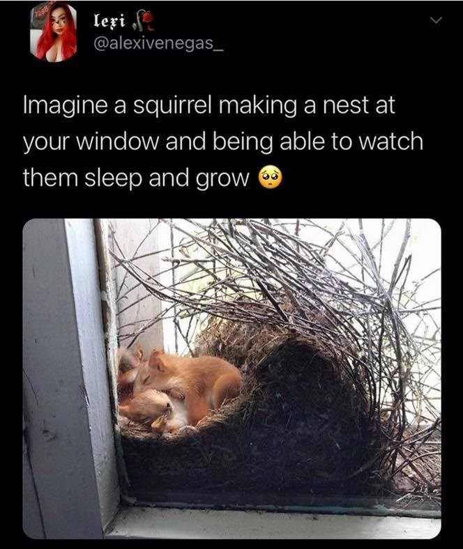 Text - leri ,f @alexivenegas_ Imagine a squirrel making a nest at your window and being able to watch them sleep and grow