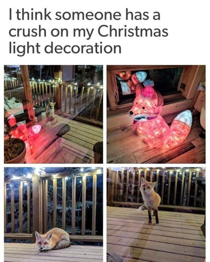 Pink - I think someone has a crush on my Christmas light decoration
