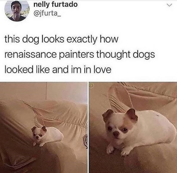Canidae - nelly furtado @jfurta_ this dog looks exactly how renaissance painters thought dogs looked like and im in love