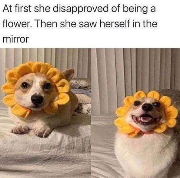 Dog - At first she disapproved of being a flower. Then she saw herself in the mirror