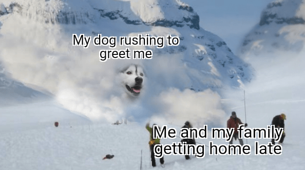Natural environment - My dog rushing to greet me Me and my family getting home late