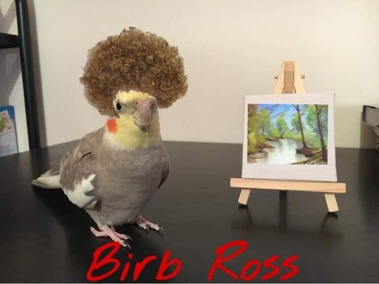 Parrot - @skad the cockatiel Birb Loss