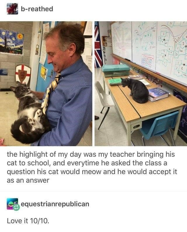 Cat - b-reathed the highlight of my day was my teacher bringing his cat to school, and everytime he asked the class a question his cat would meow and he would accept it as an answer equestrianrepublican Love it 10/10. भ्र ॥ |