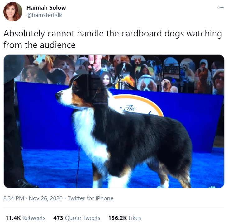 Dog - Hannah Solow 00 @hamstertalk Absolutely cannot handle the cardboard dogs watching from the audience The 8:34 PM · Nov 26, 2020 · Twitter for iPhone 11.4K Retweets 473 Quote Tweets 156.2K Likes