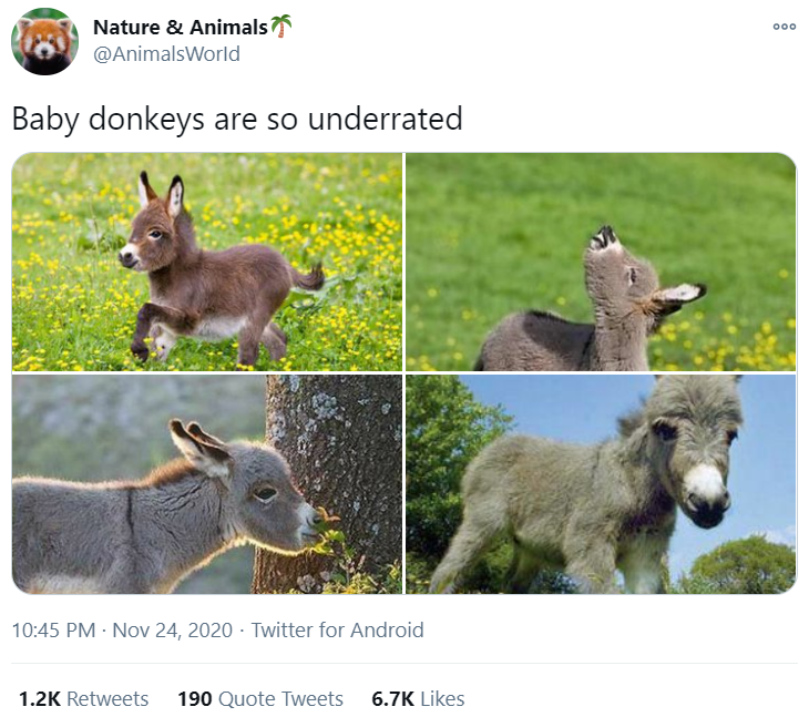 Vertebrate - Nature & Animals @AnimalsWorld Baby donkeys are so underrated 10:45 PM · Nov 24, 2020 · Twitter for Android 1.2K Retweets 190 Quote Tweets 6.7K Likes