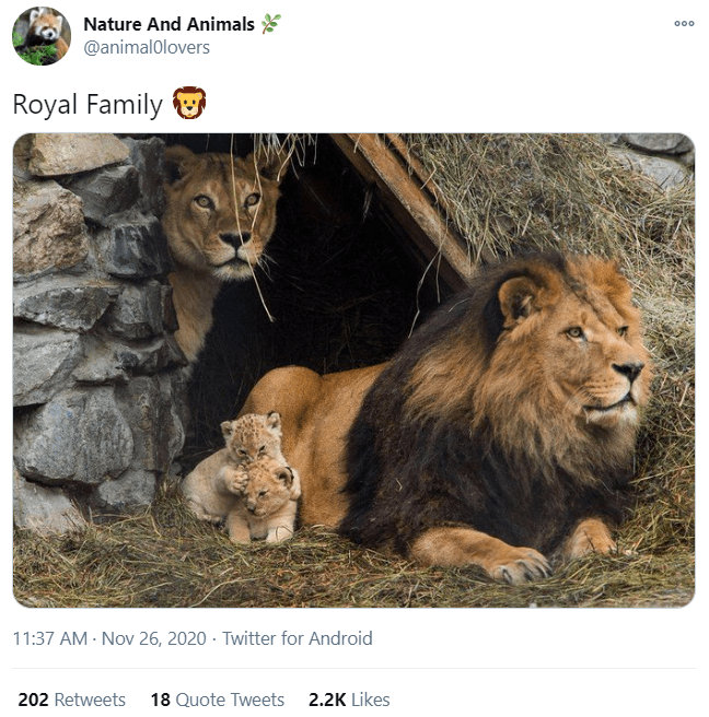 Lion - Nature And Animals 000 @animalolovers Royal Family 11:37 AM - Nov 26, 2020 · Twitter for Android 202 Retweets 18 Quote Tweets 2.2K Likes
