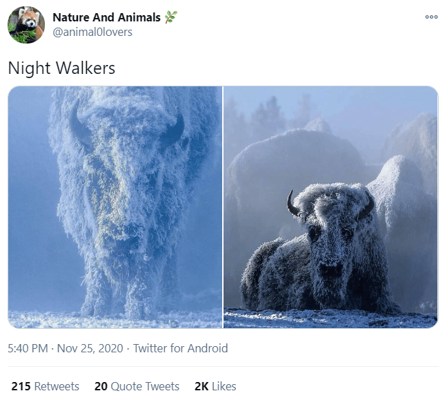 Water - Nature And Animals 000 @animalolovers Night Walkers 5:40 PM · Nov 25, 2020 · Twitter for Android 215 Retweets 20 Quote Tweets 2K Likes