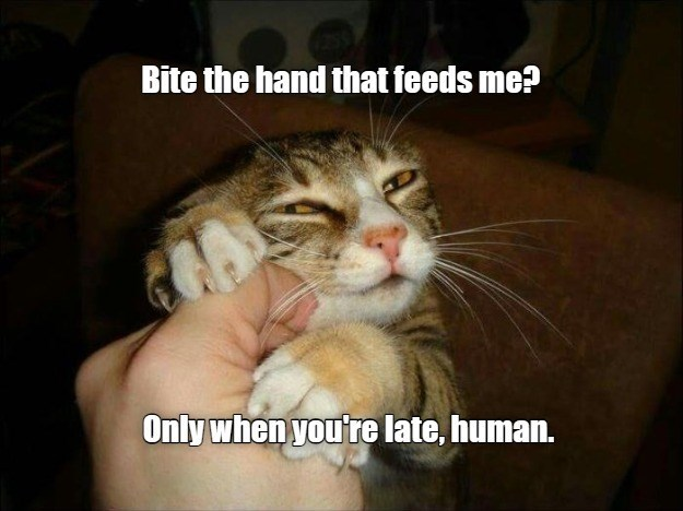 Bite the hand that feeds me? Only when you're late, human. | funny pic of a suspicious looking cat clawing at a human hand