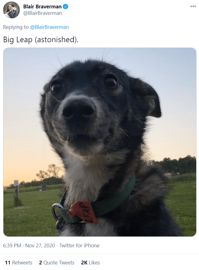 Dog breed - Blair Braverman @BlairBraverman 000 Replying to @BlairBraverman Big Leap (astonished). 6:39 PM · Nov 27, 2020 · Twitter for iPhone 11 Retweets 2 Quote Tweets 2K Likes LEAP