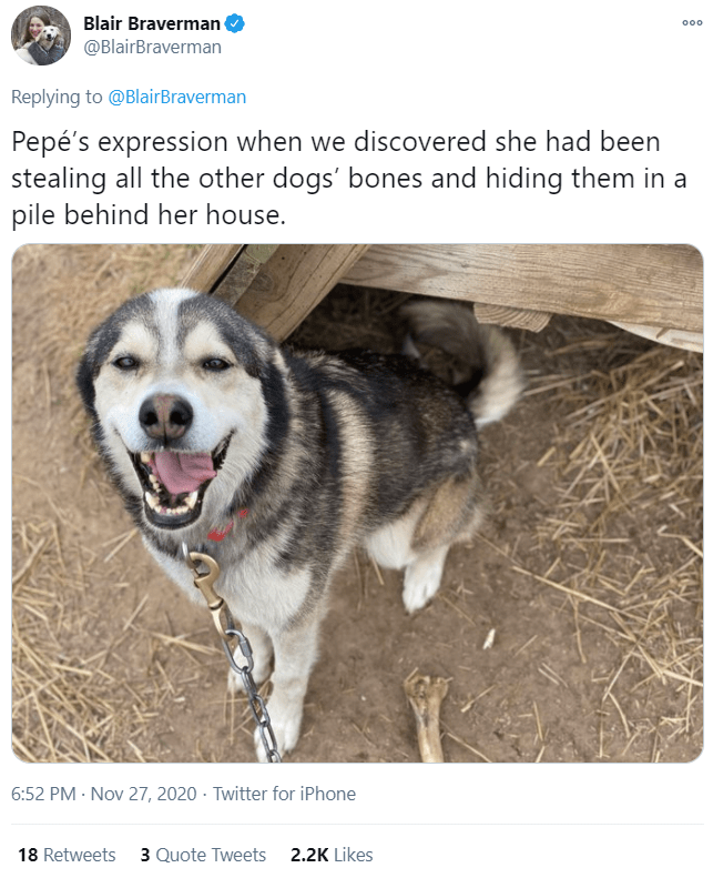 Dog - Blair Braverman @BlairBraverman 000 Replying to @BlairBraverman Pepé's expression when we discovered she had been stealing all the other dogs' bones and hiding them in a pile behind her house. 6:52 PM · Nov 27, 2020 · Twitter for iPhone 18 Retweets 3 Quote Tweets 2.2K Likes