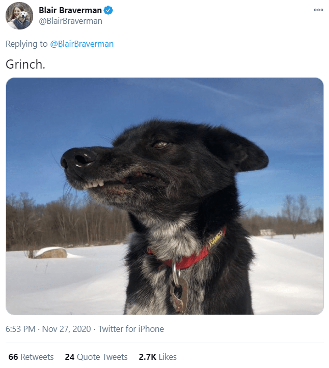 Dog breed - Blair Braverman @BlairBraverman 000 Replying to @BlairBraverman Grinch. RAMCO 6:53 PM · Nov 27, 2020 · Twitter for iPhone 66 Retweets 24 Quote Tweets 2.7K Likes